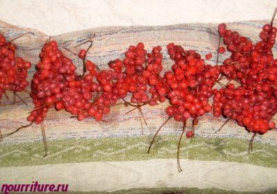 Schisandra-Beeren-Tinktur selbst gemacht